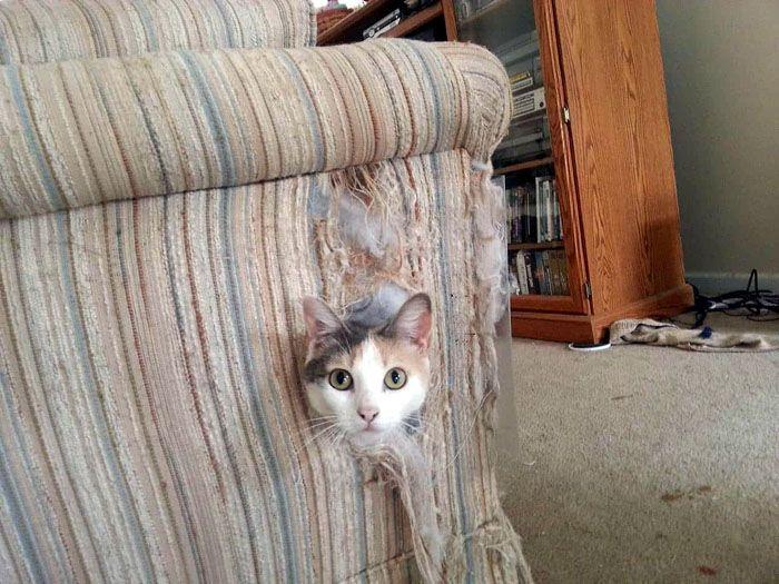 «Хозяин, нет когтеточки? Значит, мебель у тебя лишняя!»