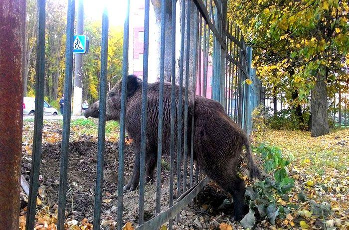 Если сделать слишком большие расстояния между прутьями, через такую ограду легко проникнут непрошеные гости