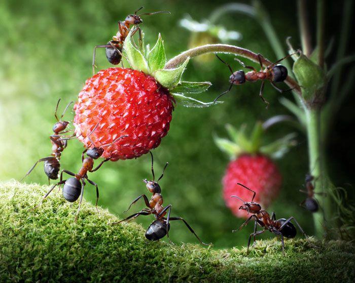 А если у вас частный дом, проведите работу и в саду, ведь муравьи могут не просто атаковать ваш дом, но и значительно подпортить урожай