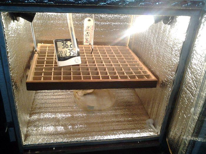 Нагреватель можно закрепить над лотком с яйцами, под ним или по периметру кладки. Он должен работать без перебоев и равномерно прогревать лоток