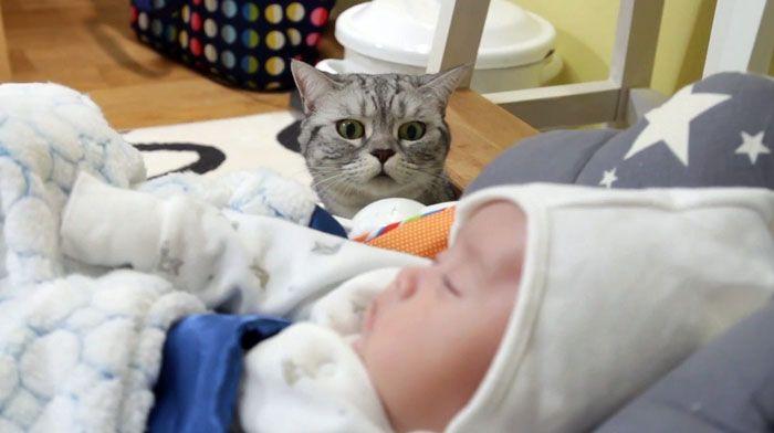 Если в доме есть любопытные кошки или собаки, занавеска оградит ребёнка от их посягательств
