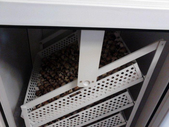 Наклонные системы подходят для яиц любых размеров и отличаются безопасностью