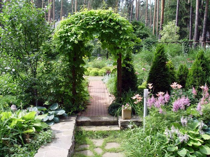 Арки, увитые зелёными или цветущими растениями в тёплое время года, не менее красивы и зимой