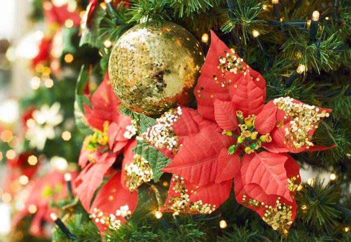 Яркая пуансеттия легко декорирует и еловые ветви, и венки, и стол