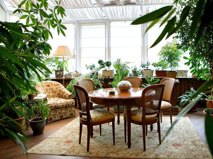 Растения в интерьере жилого дома