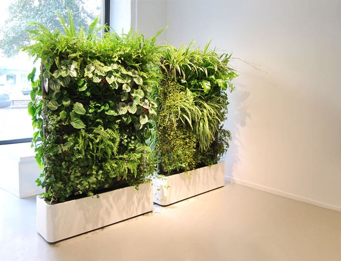Стена или стеллаж создаются из набора растений, отличающихся оттенком, формой листьев