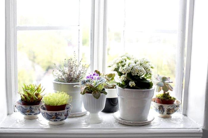При желании уставить подоконник цветами ориентируются на размеры окна и самого подоконника: лучше обратить внимание на небольшие цветочки, которые не особенно сильно разрастутся и не помешают друг другу своим соседством