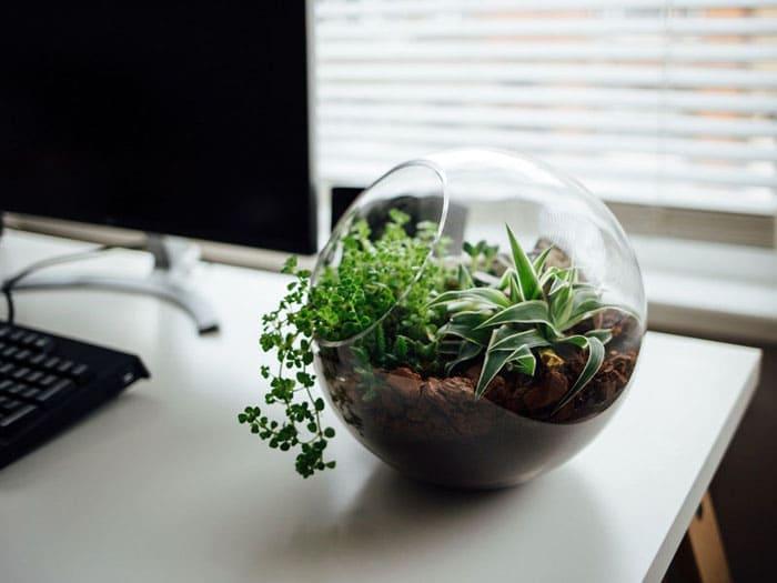 Стол на рабочем месте только выиграет, если на нём разместить необычный террариум с разными видами растений небольшого размера