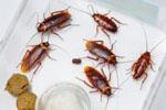 Как избавиться от мышей в частном доме? Эффективные методы