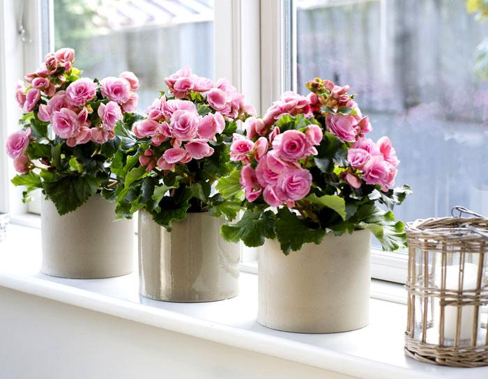 самые красивые домашние цветы названия и фото