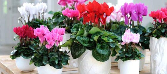 Комнатные домашние растения и цветы фото и названия