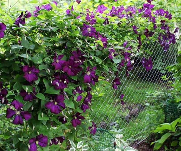 Живые вьющиеся растения в летний период станут лучшим украшением