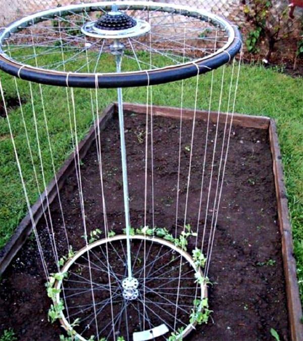 Когда шпалера будет оплетена ростками, она станет похожа на зелёную тумбу
