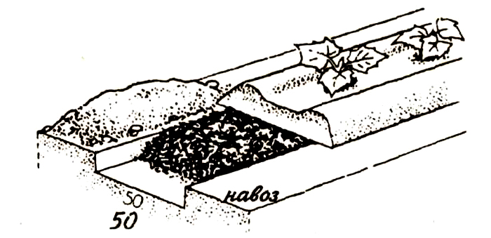 Для удобрения подходит навоз КРС или специальные минеральные вещества