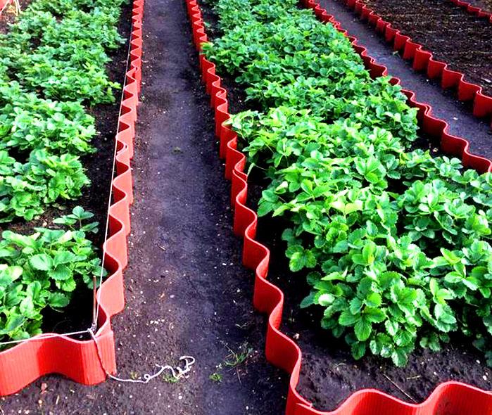 Длинные узкие грядки удобны для сбора урожая