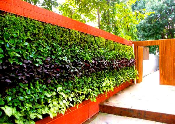 Для вертикального озеленения не нужно отдельного места, растения прекрасно увивают любую стену, арку и перголу