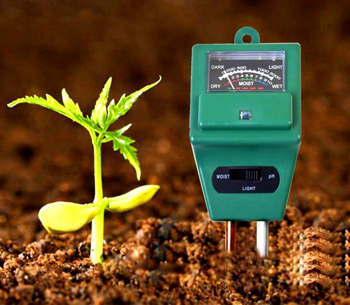 В противном случае, всегда можно принять разумные меры и подкорректировать кислотность почвы