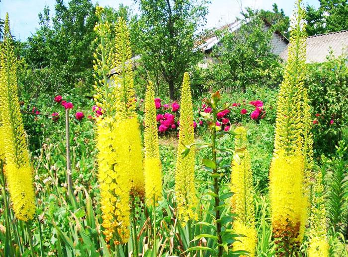 Каталог многолетних цветов для дачи, фото с названиями