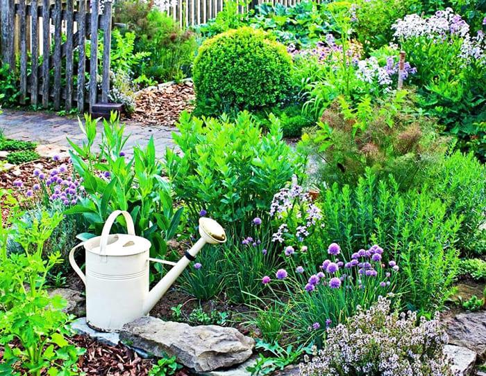 Можно выделить под пряности отдельную клумбу или рассадить ароматные травы в разных местах